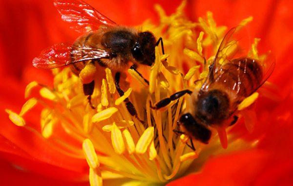 """Le api """"sorelle"""""""